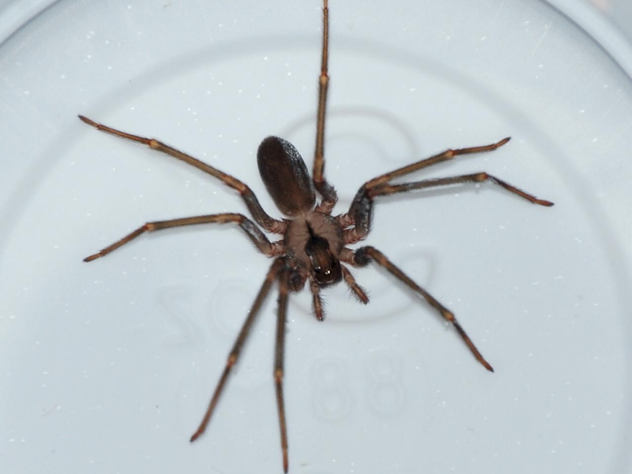 love joy spiders
